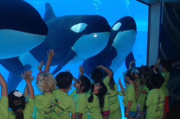 SeaWorld to stop breeding orca whales