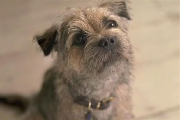 Wickes: home improvement chain introduces Wckesy the dog in latest ad campaign