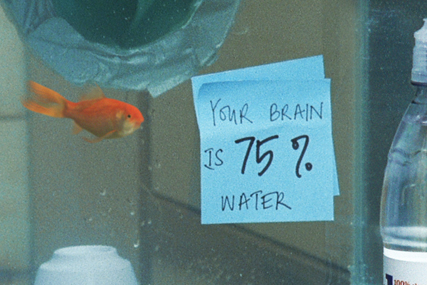 Drench: unveils Goldfish ads