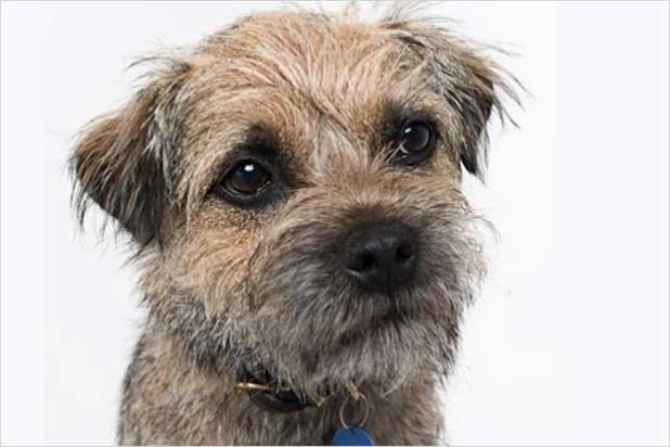 Wickes: Wicksey the dog character