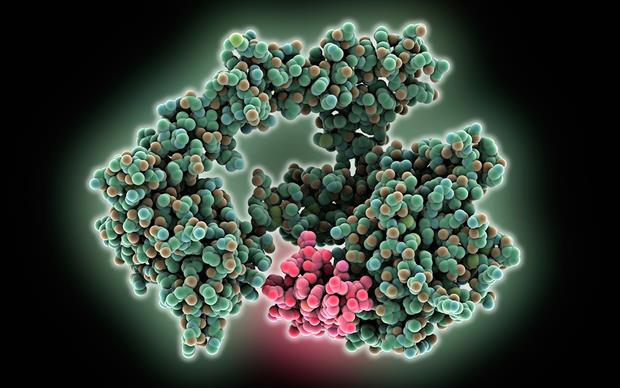 Activation of EGFR has been linked to malignant progression, induction of angiogenesis and inhibition of apoptosis, or cell death. | SCIENCE PHOTO LIBRARY