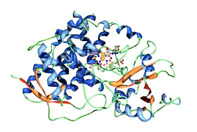 Cobicistat is used for its ability to inhibit the activity of the cytochrome P450 enzyme (pictured) in the liver | SCIENCE PHOTO LIBRARY