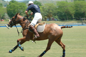 Moyses Stevens Flowers wins Mint Polo contract