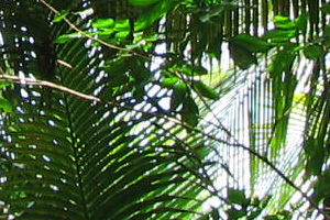 London Zoo to open rainforest experience