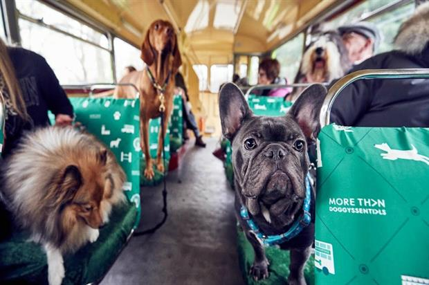 More Than: city tour for dogs