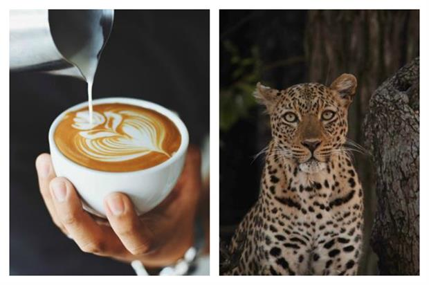 The London Coffee Festival and a Love Nature exhibition are among brand experiences to see this weekend