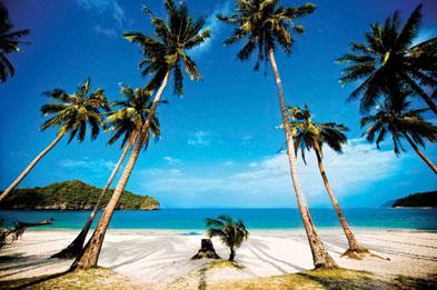 Palm Trees On The Beach - Thomas Cook