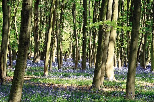 Trees: UK nurseries need to start sowing or potting up for HS2 scheme but contract details remain under wraps - image: Morguefile