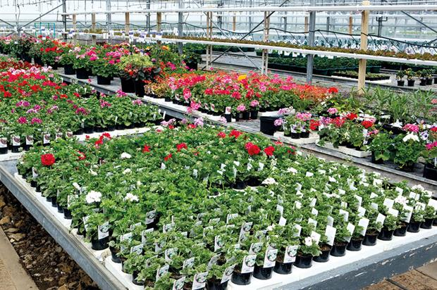Growers: some guidance will be offered by ornamentals representative bodies ahead of EU referendum on 23 June - image: HW