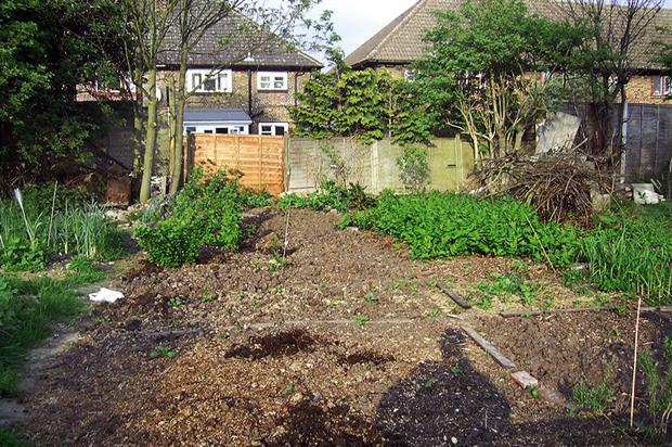 Allotment plots: worrying trend - image: HW