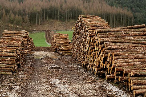 Timber: volume felled for plant health reasons up 0.8 million tonnes - image: Peter Trimming