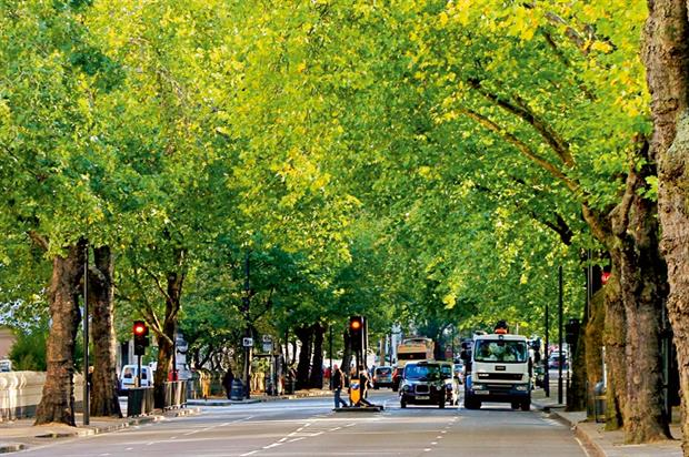 Street trees: negative canyon effect highlighted in Swedish research. Image Otto Kristensen