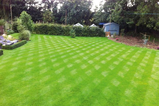 Hedges-Gower's lawn: fed twice in the past year - image: HW