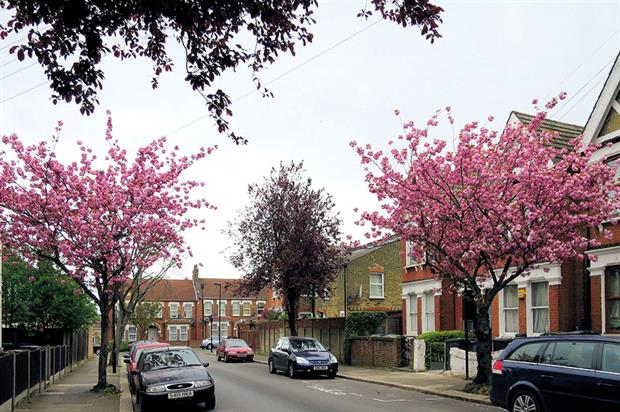 Sheffield: disputes over street tree removals in the city - image: Alan Stanton