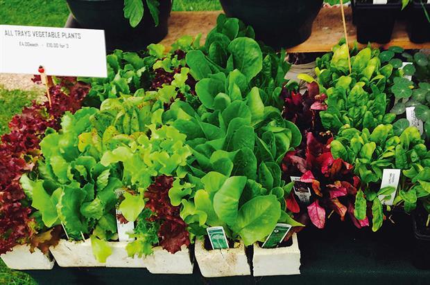 Vegetable plants: sales increase