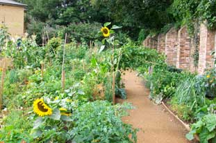 Reclamation of King Henry's Walk Garden in North London as an allotment - photo: HW