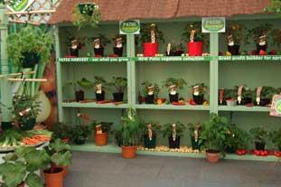 Plant Sarus' Patio Harvest range - photo: HW