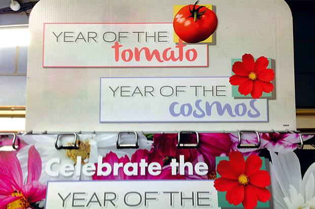 Cosmos and tomato: joint display stand unveiled at company's trials