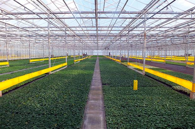 Delamore: linking with German grower Volmary will enable better IT, genetics, technology and research. Image: Delamore