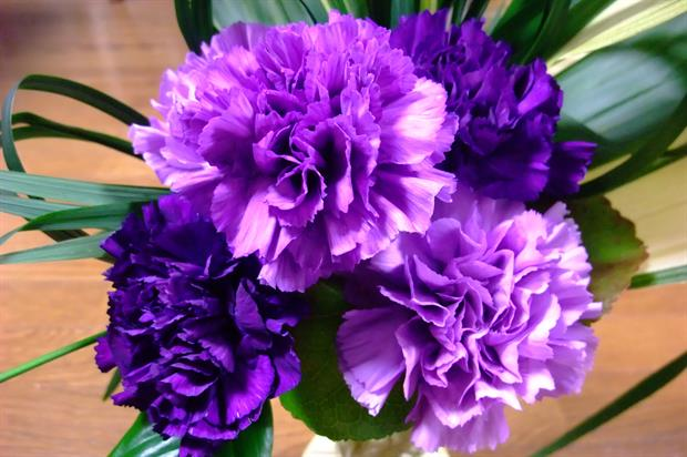 Carnations receive approval - image: HW