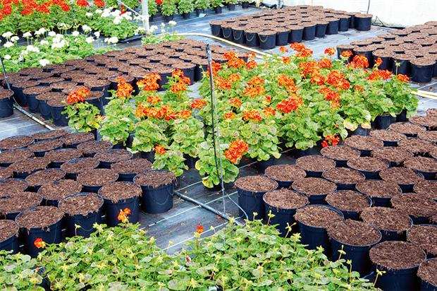 Industry stakeholders: questionnaire gathered feedback on future of the Horticultural Innovation Partnership - image: HW