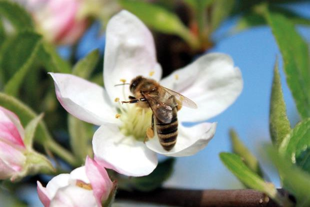 Neonicotinoid: a Parliamentary debate was secured
