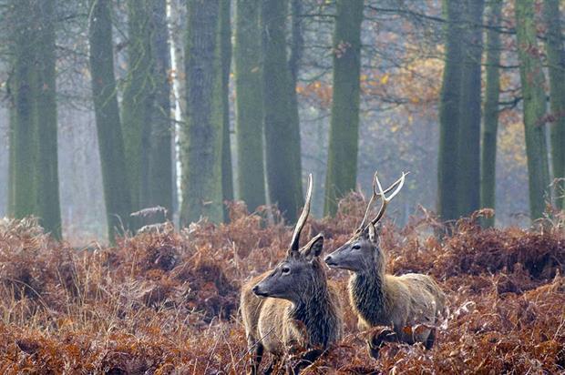 Richmond Park: south London sites sampled for ticks - image: The Royal Parks