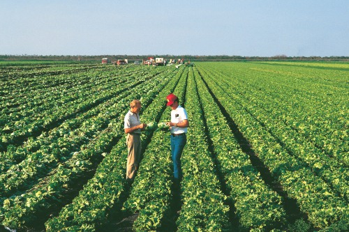 Biological crop protection in action - image:Bayer CropScience