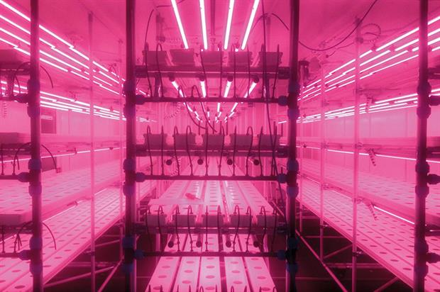 VydroFarm: modular mobile racks and gully trays can be tailored to fit different spaces, crops and even climates - image: HydroGarden