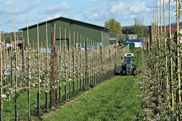 Fruit farms: UK trade policy and changes in the UK farm subsidy regime post-Brexit would have little impact - image: HW