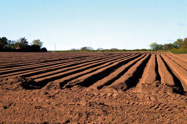Field health: crop rotations will improve quality of soil - image: Alison Benbow