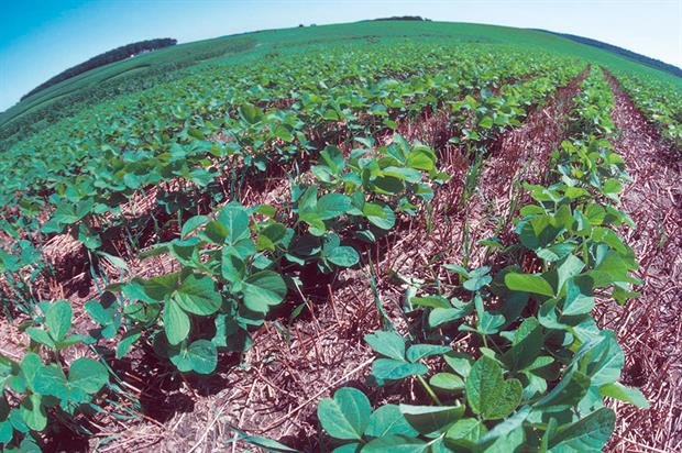 Crops: intercropping is a traditional farming practice - image: USDA