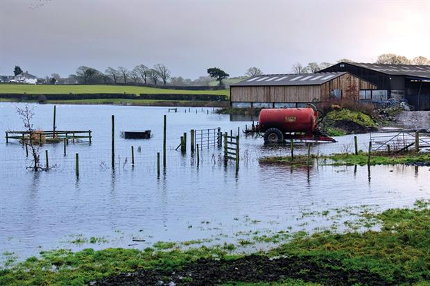 Flooding: carrots are now in short supply after wet weather affected several of the country's main growing areas - image: Terran Brown