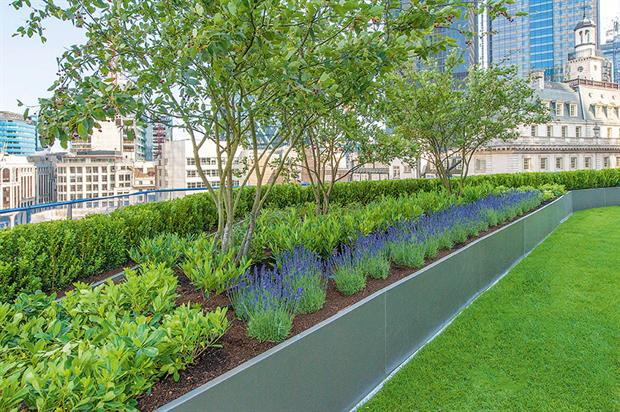 Willerby Landscapes: aims to buy shrubs from UK where possible but uses overseas nurseries with good track record - image: Willerby Landscapes