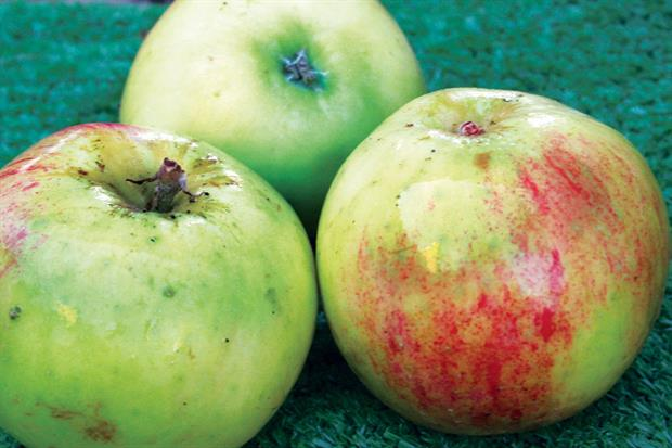 Bramley apples: sales to 21 March increased by nearly 25 per cent - image: HW