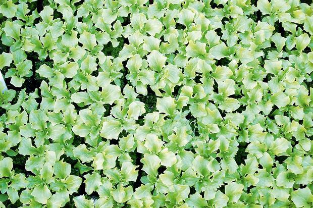 Seedlings: paper tape trialled - image: Nick Saltmarsh