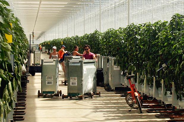 Tangmere: glasshouse grower needs best people to expand business