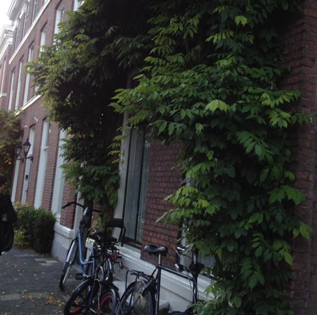 Green city: Image HW