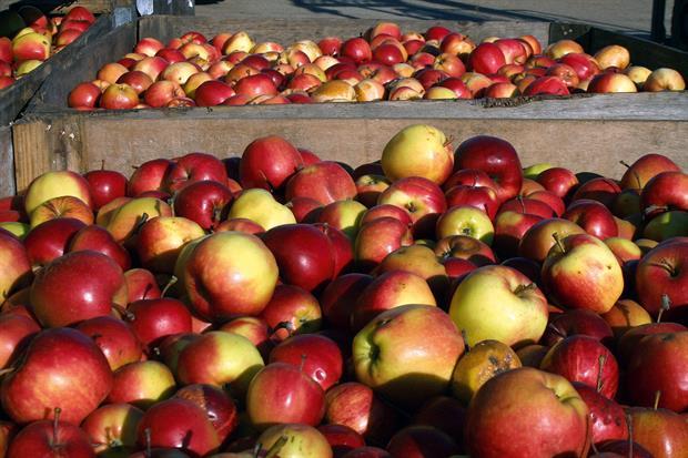 Avalon to supply apple range
