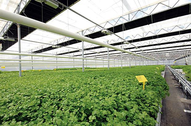 Glasshouse: facility for automatic herb potting, sowing and growing - image: Langmead Group