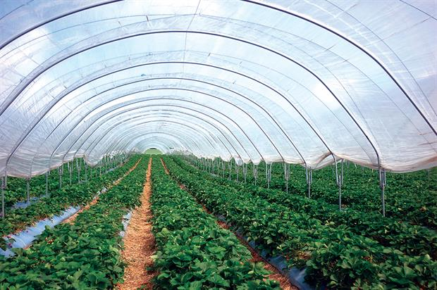 Polytunnels: increased area was installed for growing over 2011-13 - image: HW