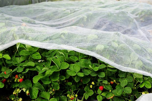 The right sort of fabric can give protection against frosts, rain, hail and wind and can eliminate damage from insects - image: XL Horticulture
