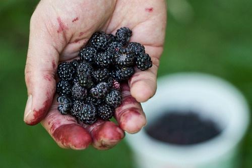 fruit picking - image:Susy Morris