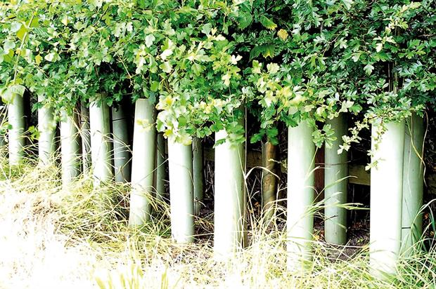 Tubex: tree shelters are designed to protect and enhance the growth of young plants - image: Green-tech