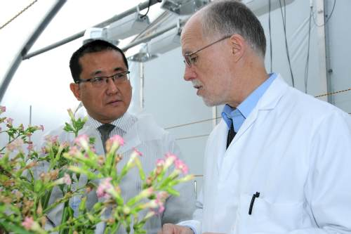 EMR deputy chief executive Dr Chris Atkinson and Professor Julian Ma of St. George's University of London - image: East Malling Research