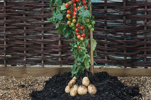 T&M's 'Ketchup and fries' TomTato® - image: T&M