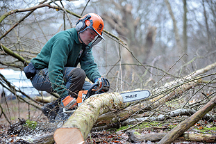 The level 3 arboriculture apprenceship programme includes advanced pruning, sectional felling and tree surveys as well as modules in business management, first aid and literacy - image: Capel Manor College