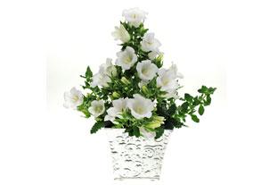 Campunula 'Bellflower White' bags press prize at Plantarium 2010 - image: Fairytale Flowers