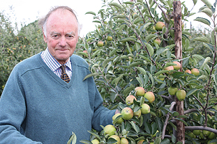 Stephen Twyman and his EKFS prize-winning Braeburn orchard - image: Brian Lovelidge
