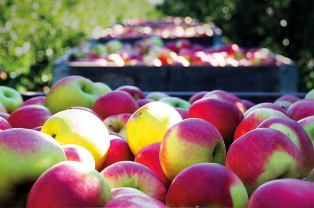 Dessert apples: 27% increase in yield seen in 2016 although this was offset by a similar decrease in value - image: Raymond Klassen